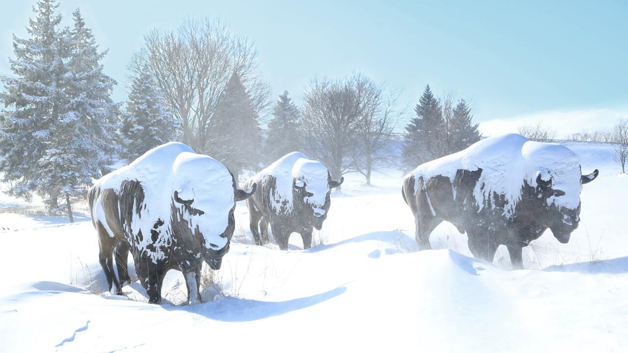 Buffalo Statues in Snow.jpg