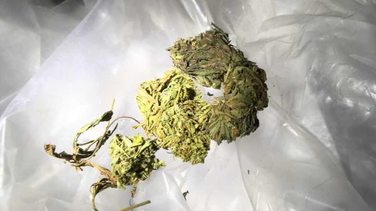 Illegal trafficking of marijuana 02