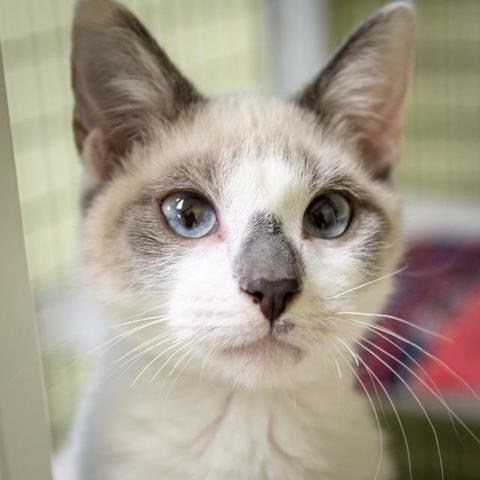 PHOTOS: 20+ adoptable pets in the Tampa Bay area for the weekend of October 12