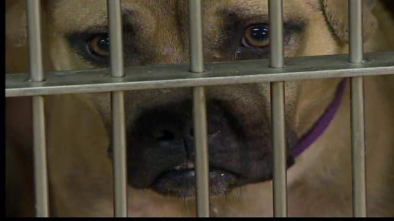 'Dog drugs' seized in CLE dog fighting bust
