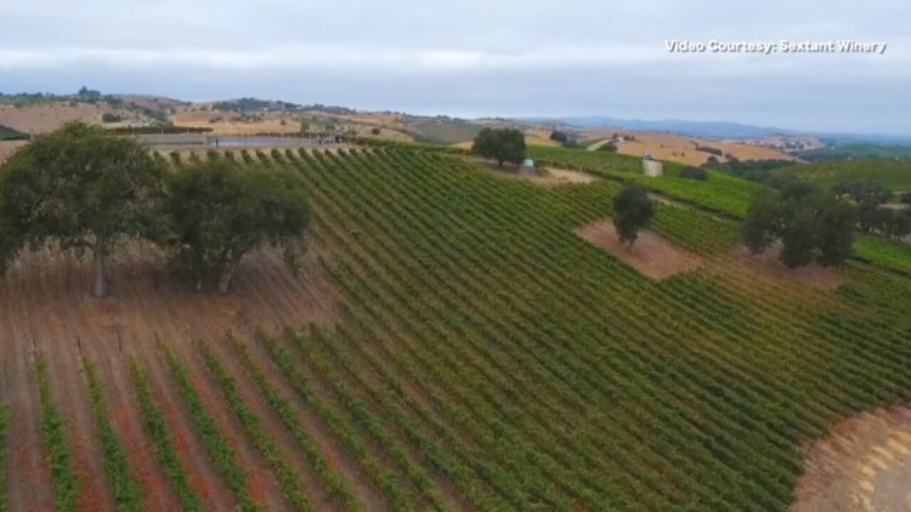 Growing millions of rootstocks for vineyards