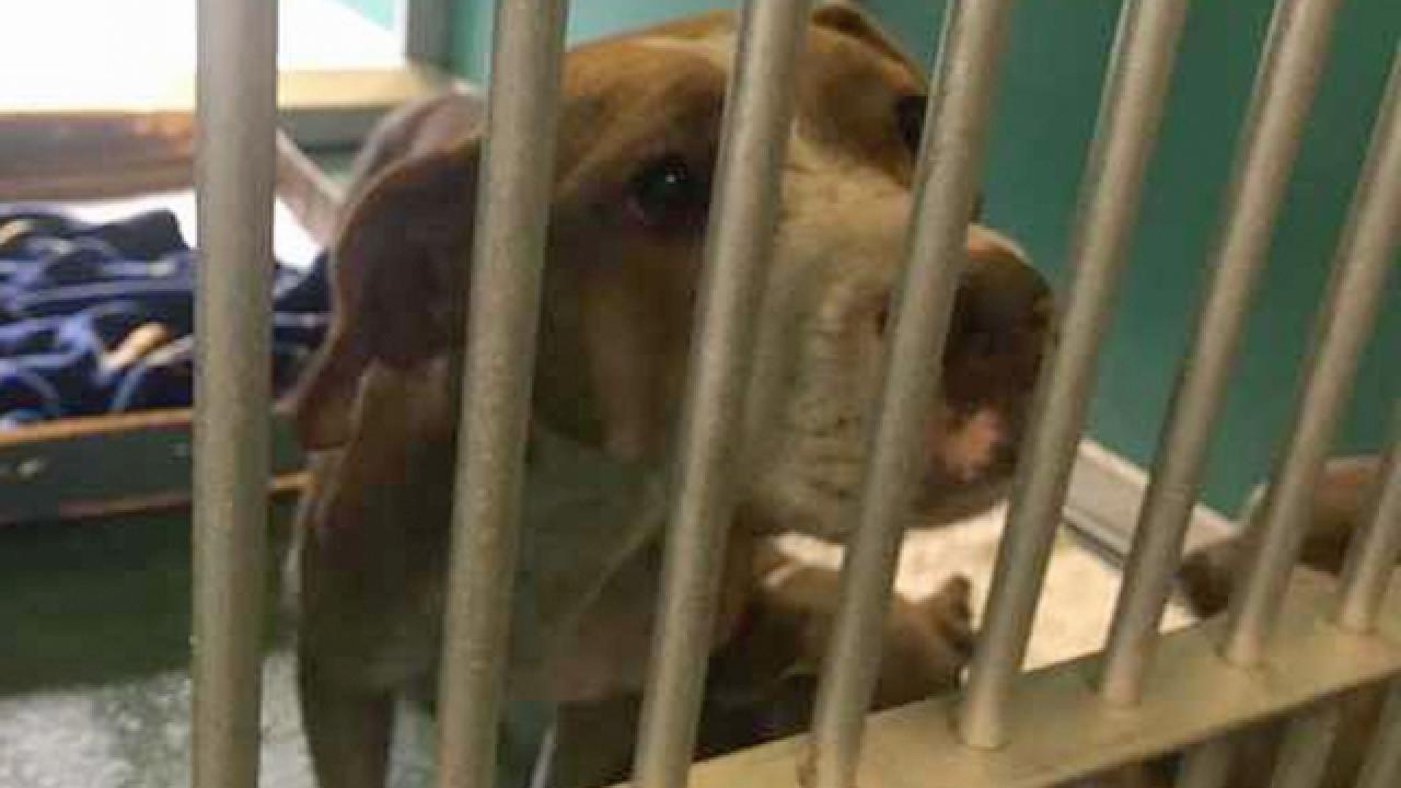 Riviera Beach city worker bitten by dogs, taken to hospital
