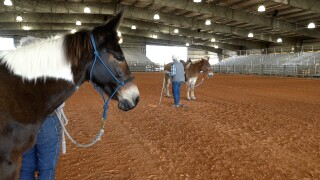 A mulemanship clinic is taking place in Fort Pierce this week.jpg