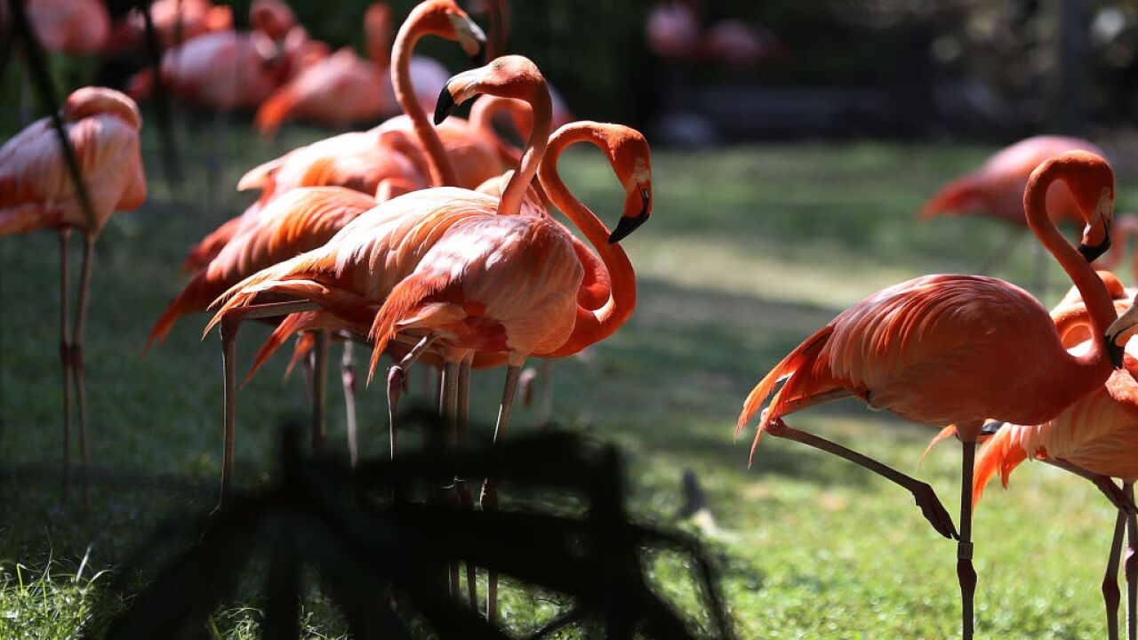 A flamingo in an Illinois zoo had to be put down after a child threw a rock at it