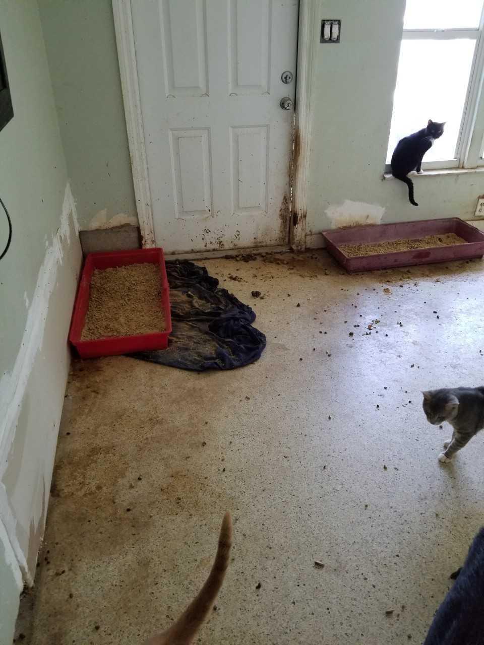 Animal hoarder Charlotte County Sunnyside Street 1.jpg