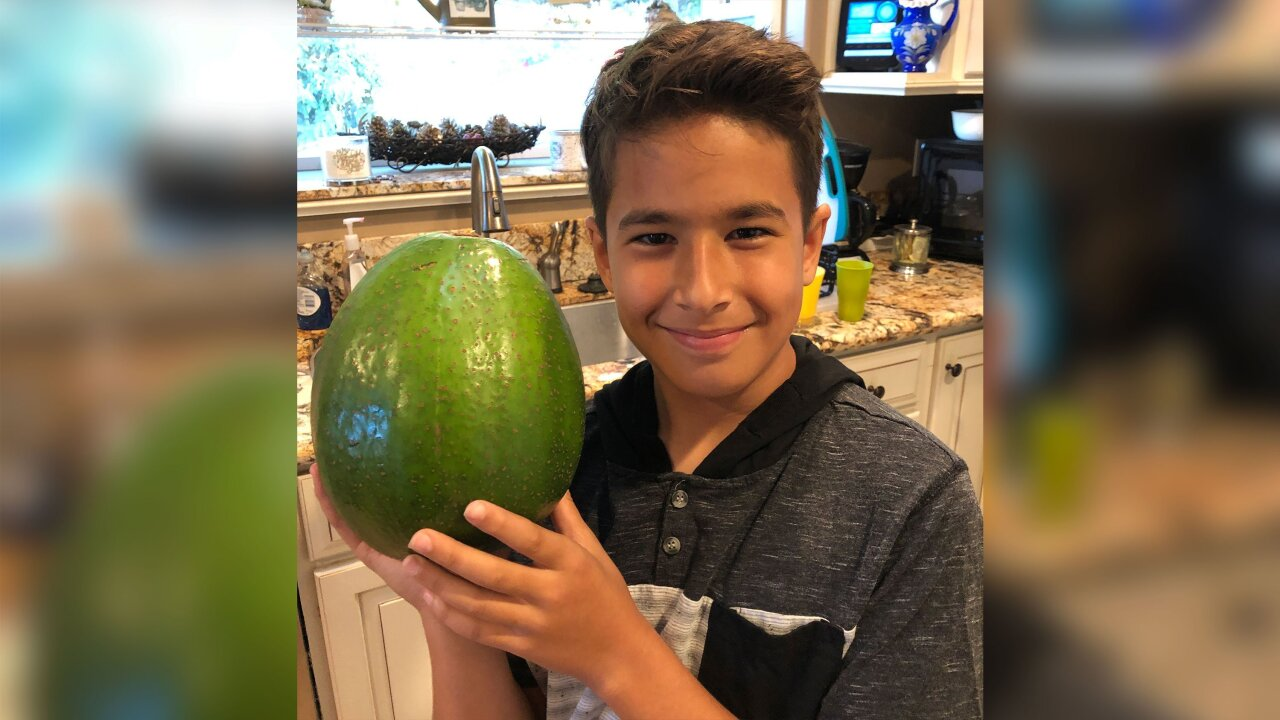 A 5.6 pound avocado set a new world record and it made enough guacamole for 20 people