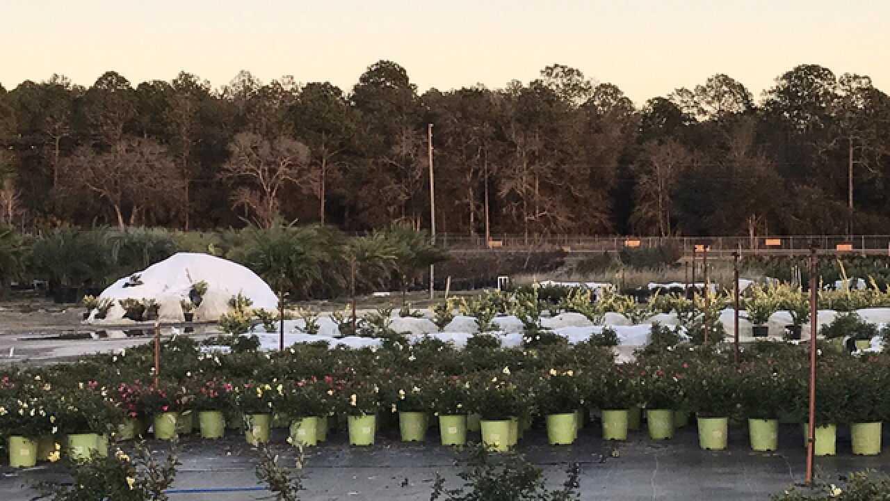 How nurseries protect plants from freeze damage