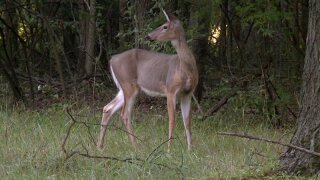 Man found shot to death after deer hunting incident in southernIndiana