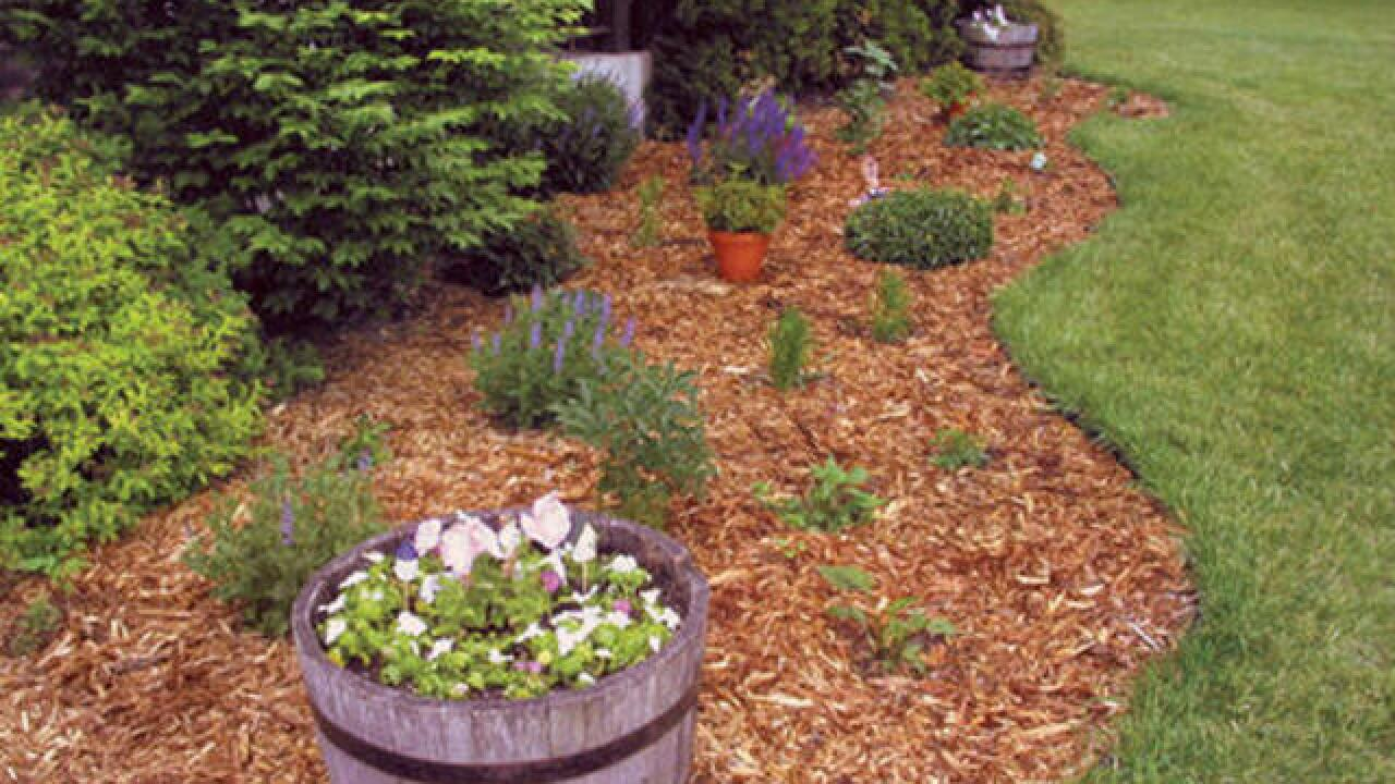 Mulch Can Help Your Plants Thrive