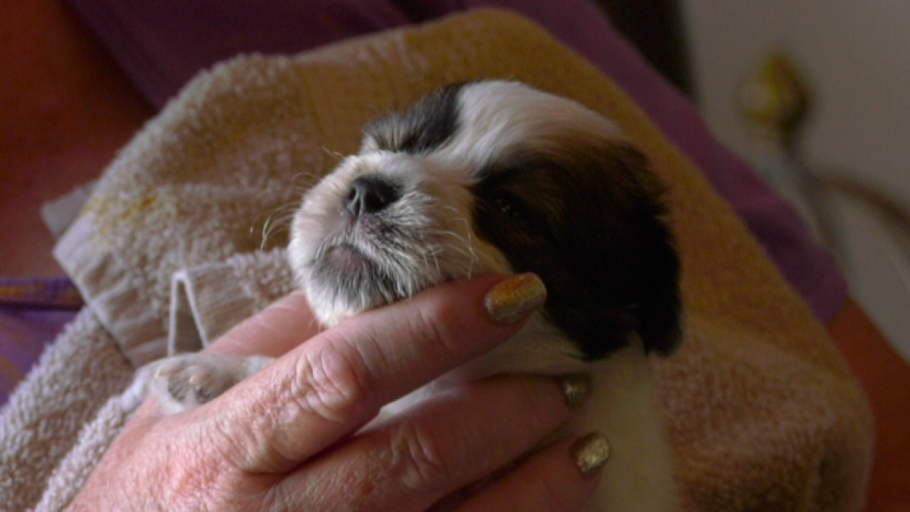 Tiny Tails in Manhattan purchases incubator to help save newborn puppies and kittens