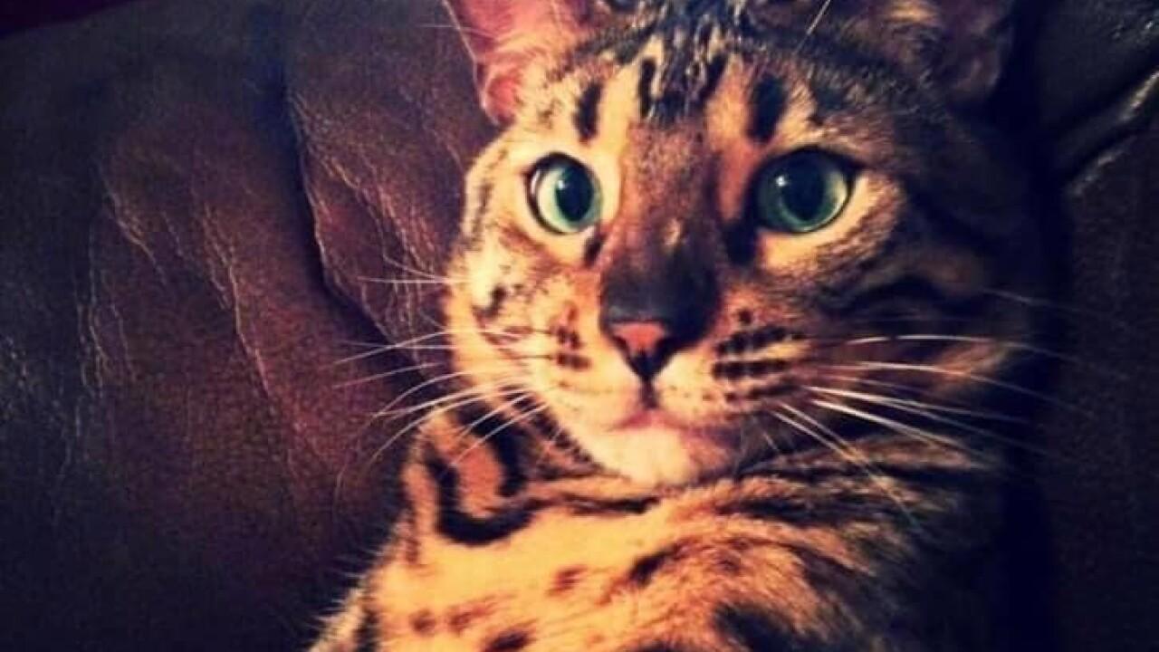 OAA offers reward after Broken Arrow family's cat is brutally killed