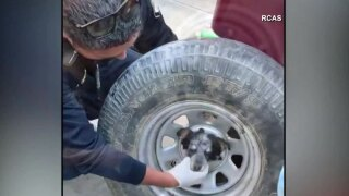 WPTV-PUPPY-TIRE-RESCUE---.jpg