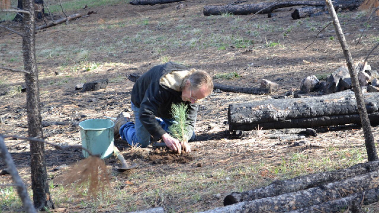Donations needed for reforestation after fires