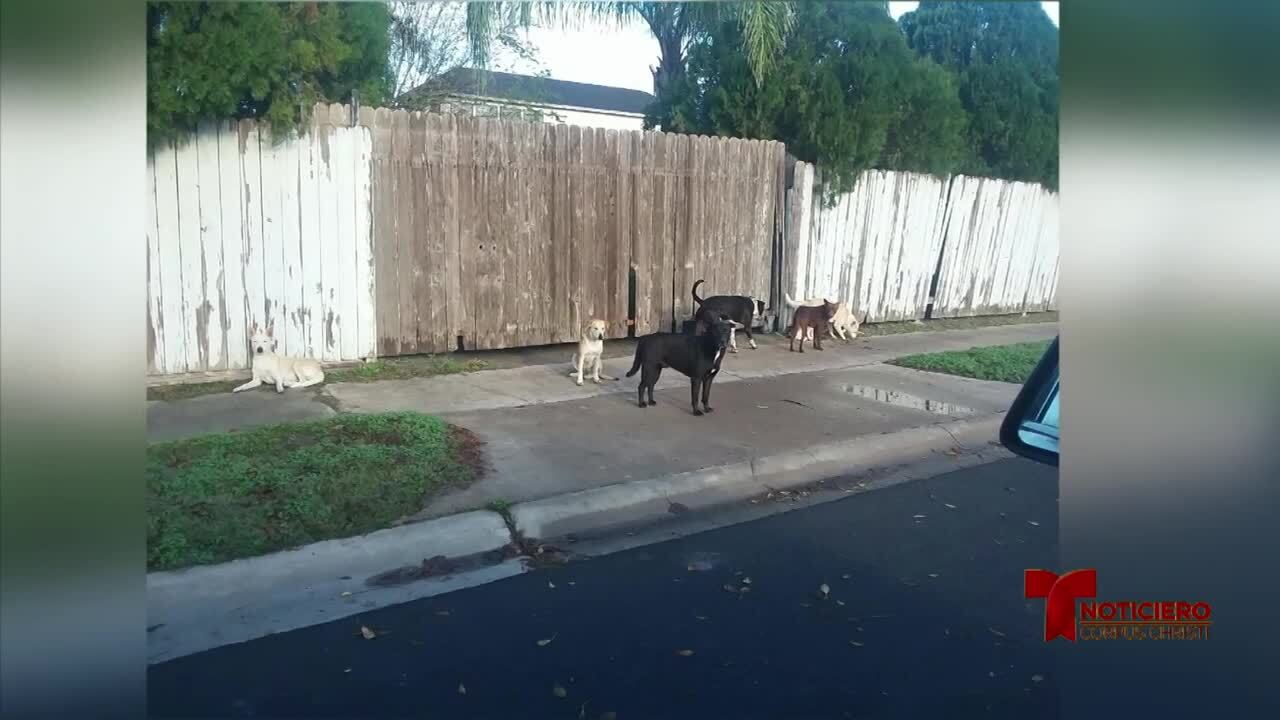 perros callejeros 010920.jpg