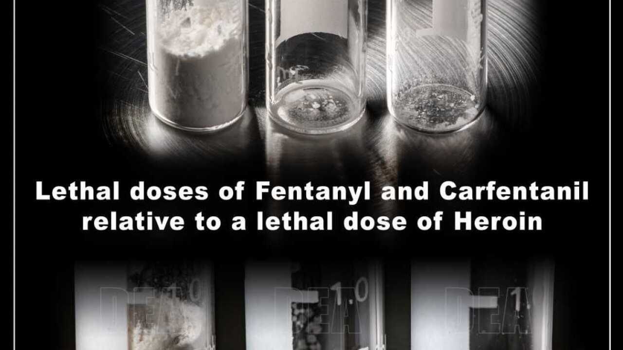 Federal Support For Potent New >> California Drug Experts Warn Of Carfentanil A Drug 100 Times More
