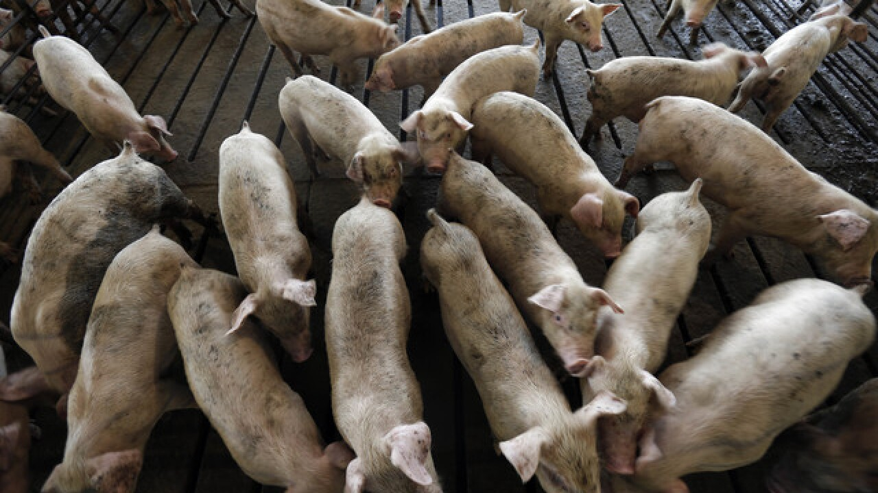 Pork giant Smithfield to convert pig poop gases into power
