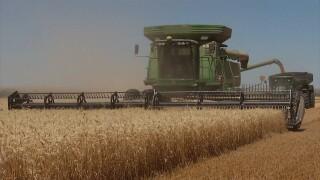 Wheat Harvest at Kehler Farm