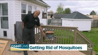 How to prevent mosquitoes