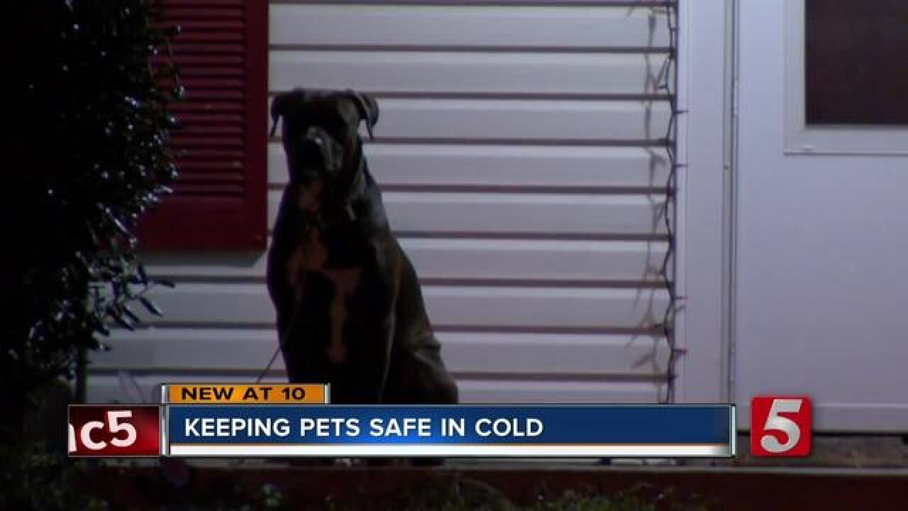 Metro Animal Care and Control prepares for winter weather enforcement