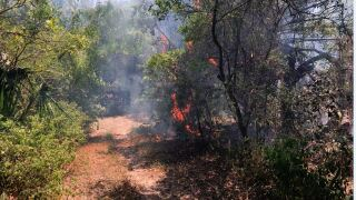 Downtown park catches fire