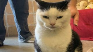 The 'world's Worst Cat' Is Seeking Her Forever Home