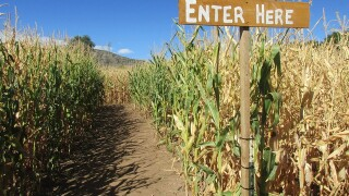 Go inside the Chatfield Farm's corn maze