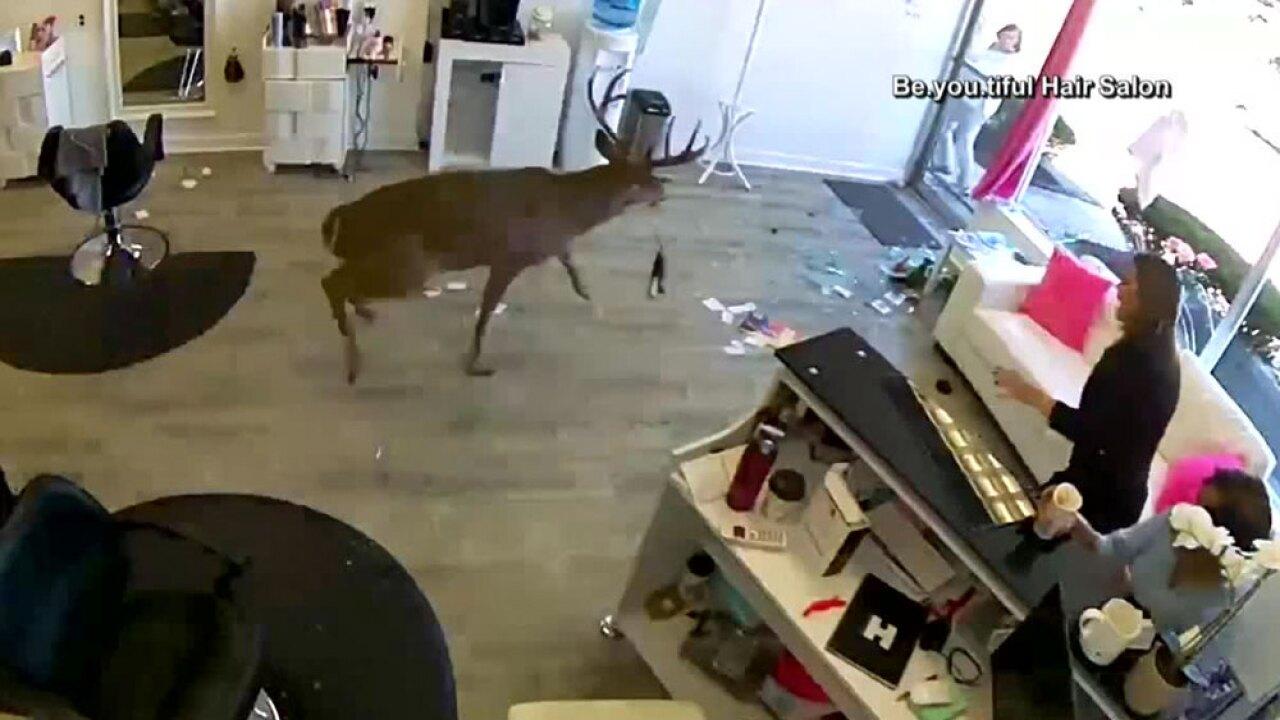 wptv-hair-salon-deer-.jpg