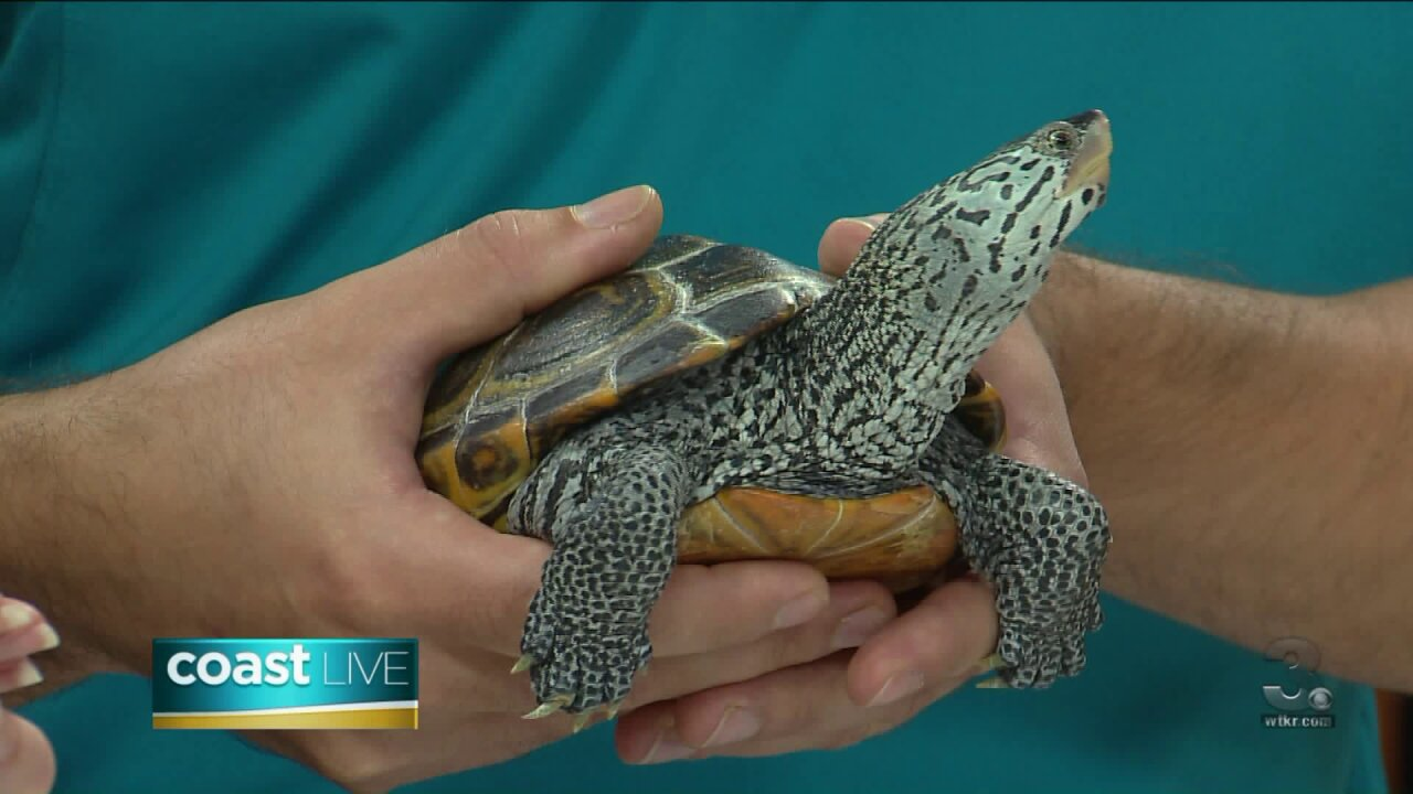 Turtle talk with the Virginia Living Museum on Coast Live