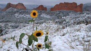 Carol McCallister sunflower snow Garden of the Gods