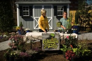 Spruce up your garden with the help of ColesvilleNursery