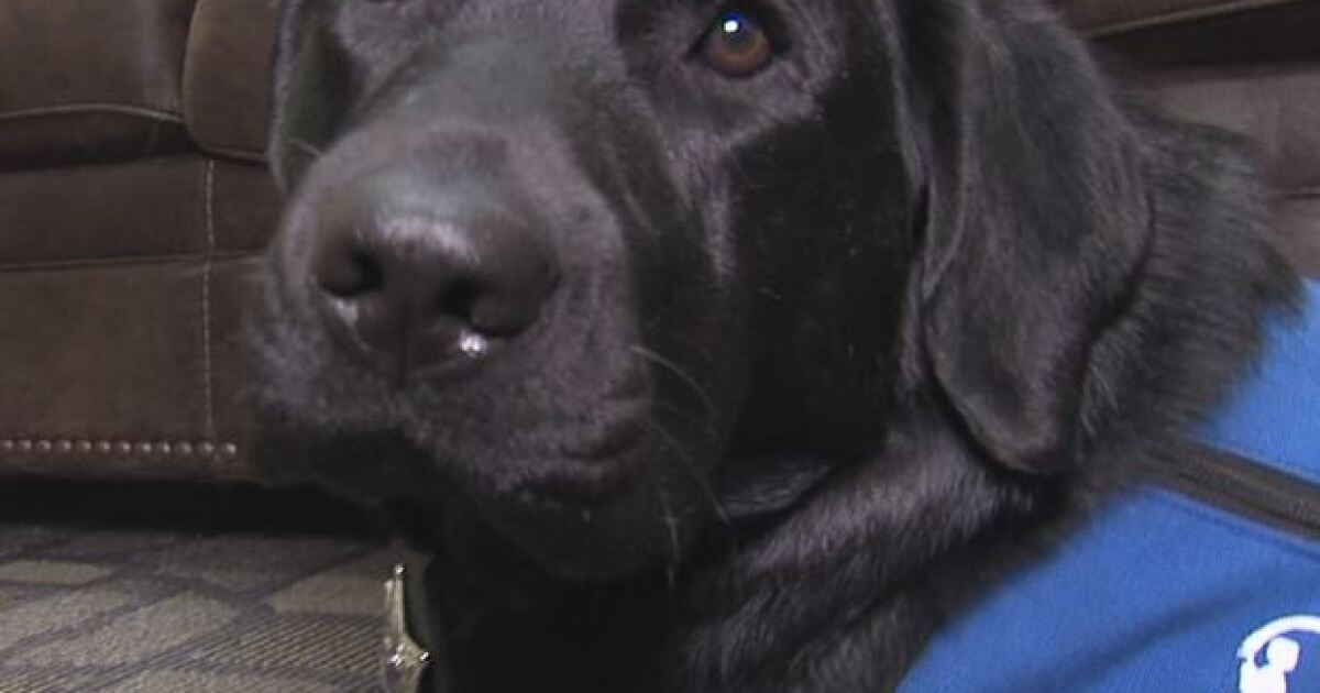 Delaware County 'courthouse dog' comforts kids who were the