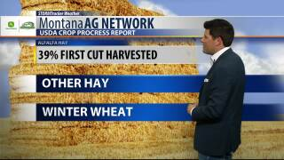 Montana Ag Network Weather: July 12th