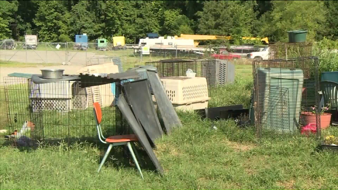 Mom, daughter charged with crimes againstdogs