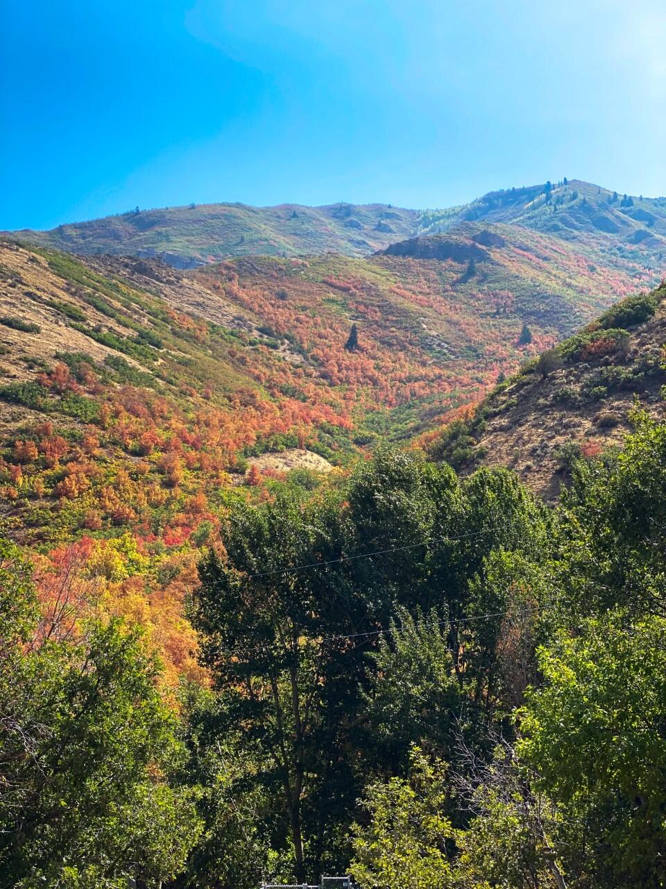 Hannah Tippets Hobble Creek Canyon2.jpg