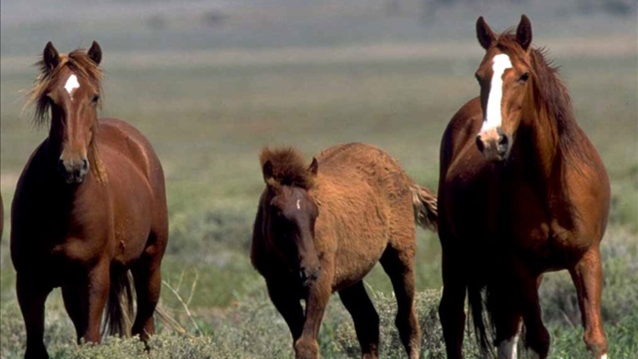 Plan to sterilize Idaho wild horses challenged