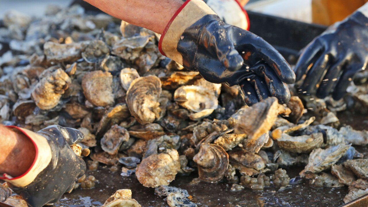 Norovirus outbreak leads to shellfish harvesting ban on stretch of Rappahannock River