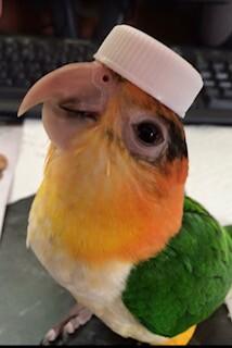 Pet Costume18.jpg