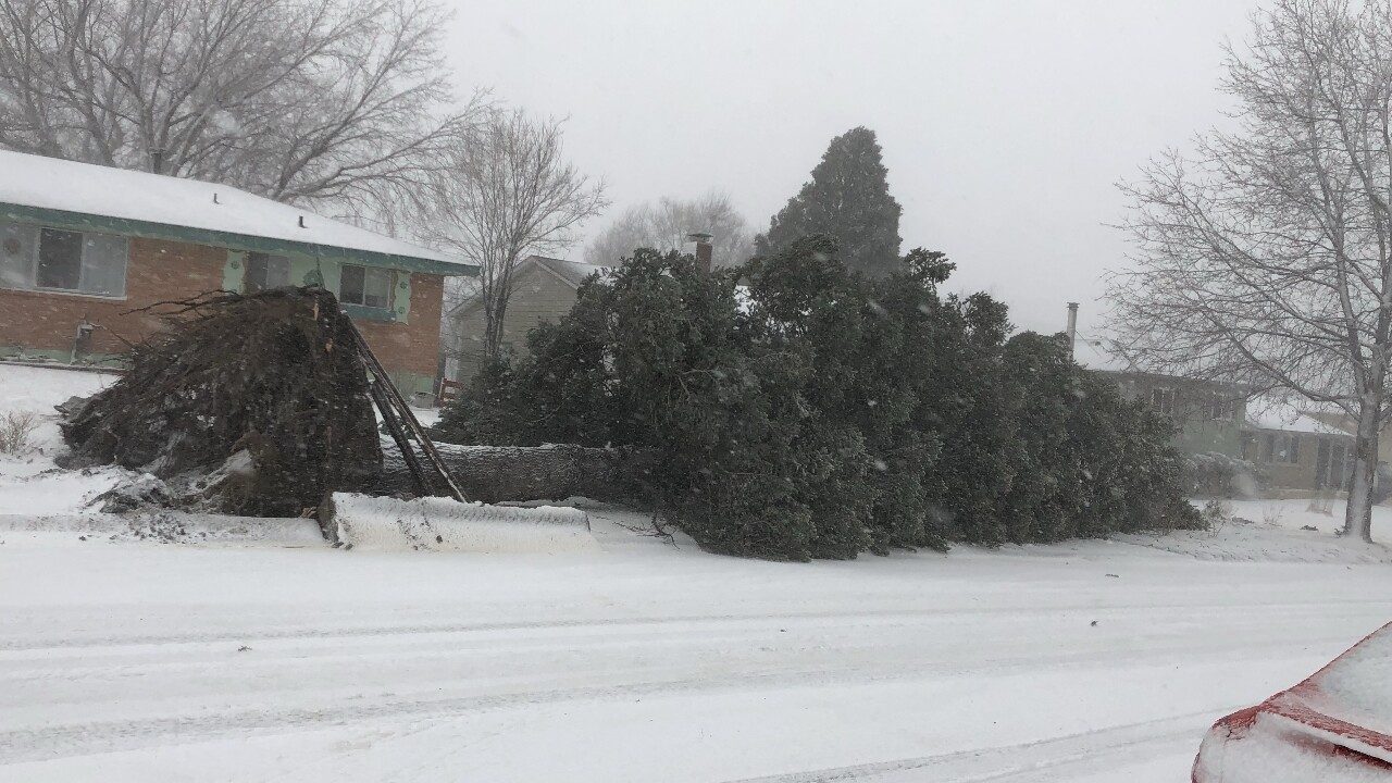 Bomb Cyclone Downed Tree by Kenneth Petitt