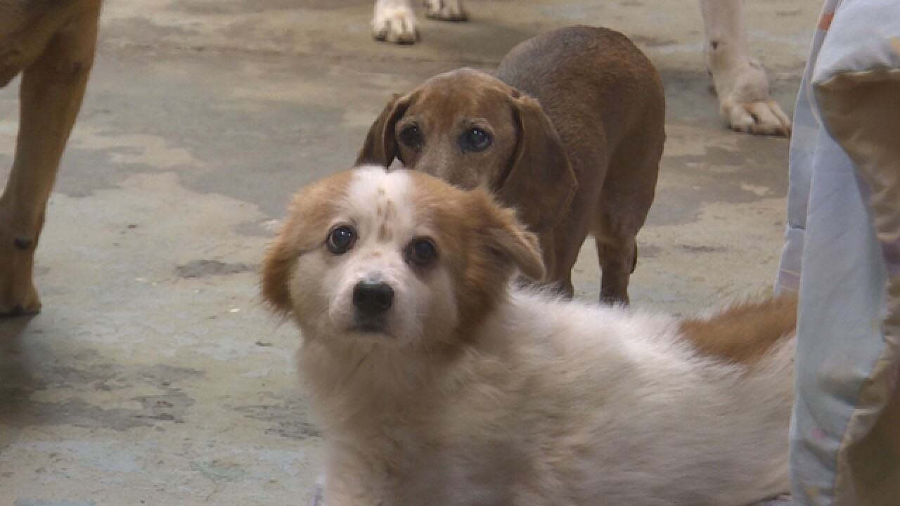Dog sanctuary helps place older pups with foster families