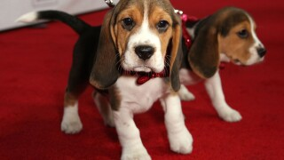 List: Most popular puppy names of 2014