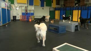 Dog kennels battle back from dog days