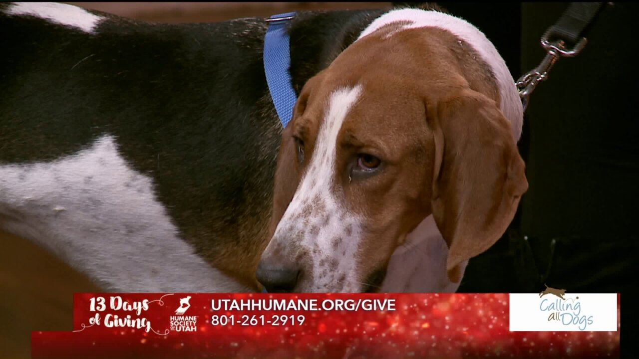 13 Days of Giving: Calling All Dogs partners with Humane Society ofUtah