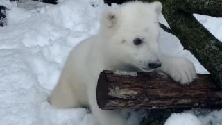 Detroit Zoo polar bear