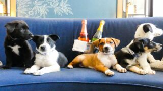 You Can Have Puppies And Prosecco Delivered To Your Room At This Hotel