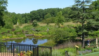 Lily Pond from the Corning Visitor Center, Holden Arboretum.