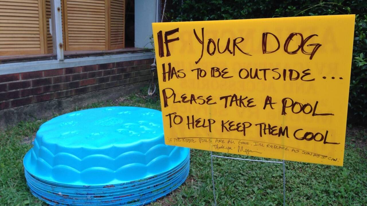The story behind this viral 'dog pool' photo