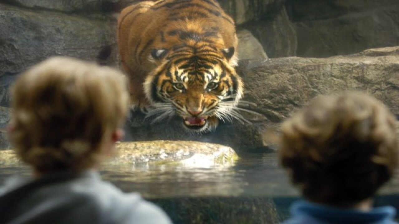 Petition wants tigers moved from Denver Aquarium