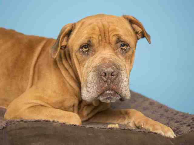 Adoptable pets from Arizona Humane Society and Maricopa County Animal Care and Control (12/20)