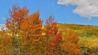 11 essential Colorado fall festivals to go to as we brace for the upcoming winter