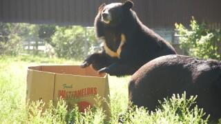 Photos: WATCH: Black bear gets root canal at Metro RichmondZoo